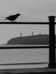 Crow & Newtown Head, Tramore Promenade, Waterford, Ireland