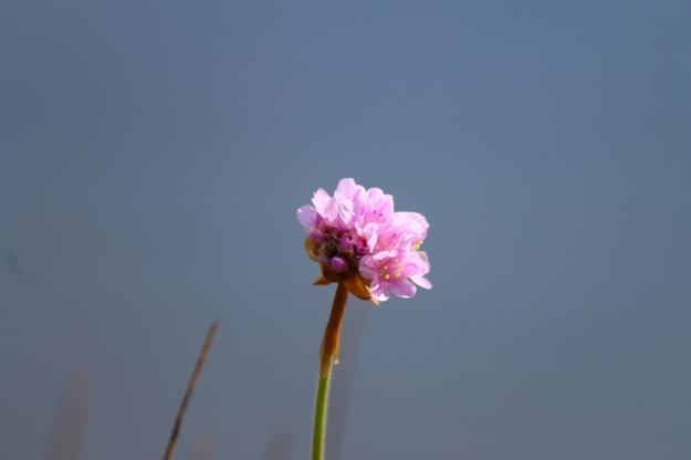 Simple pink.