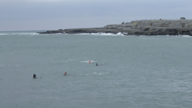 Swimming with a bottlenose dolpin at Doolin Pier