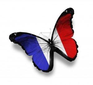 Papillion Francais
