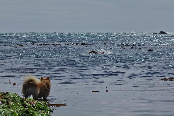 the Doglet barking at Gararrus IMG_3810.resized