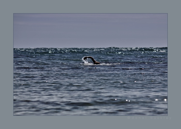 Swimming into Gararrus IMG_3806.resized