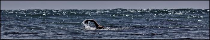 Lone Swimming