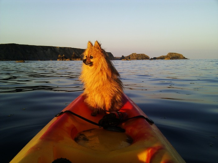 One of my other regular kayak support crew