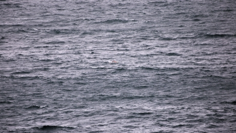 Barely seen swimmer in rough water