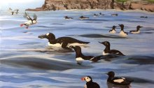 Oil painting of seabirds at Brownstown Head