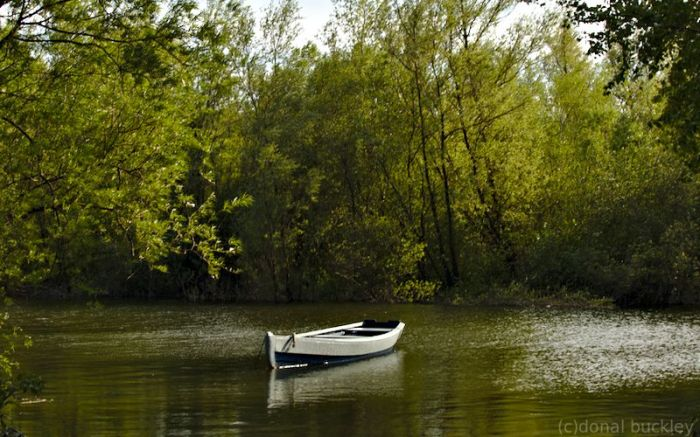 Traditional river Suir fishing boat